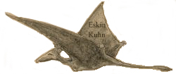 Pterosaur seen by Eskin Kuhn in Cuba