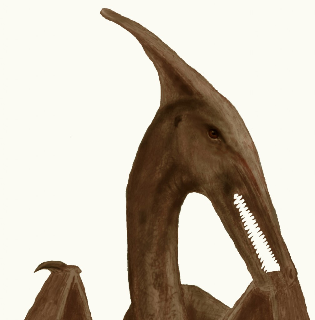 sketch of pterosaur seen by Patty Carson in Cuba in 1965