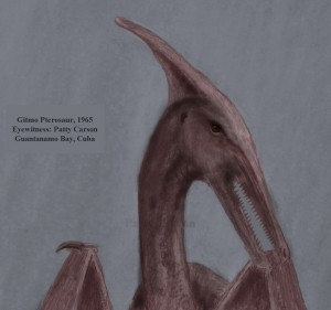 Gitmo Pterosaur sketched by eyewitness Patty Carson
