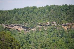 Kentucky wilderness forest